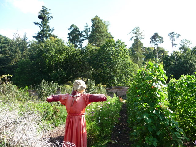 Mid Devon : Knightshayes Court, Scarecrow in the Allotment