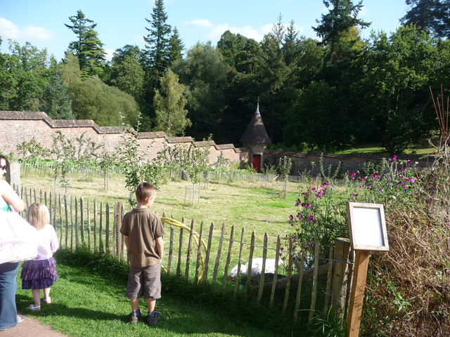 Mid Devon : Knightshayes Court, Geese in the Allotment