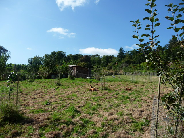 Mid Devon : Knightshayes Court, Chickens in the Allotment