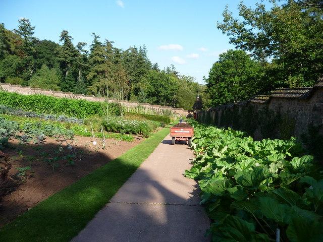 Mid Devon : Knightshayes Court, Allotment Garden