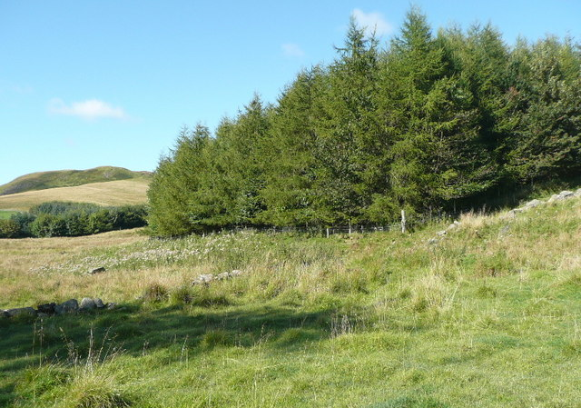 Small wood fenced and used to rear pheasants