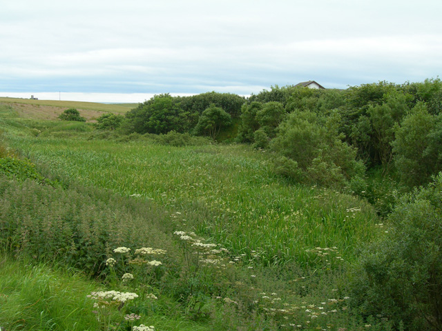 Looking south into the marshy wetland beside Graemeshall Burn