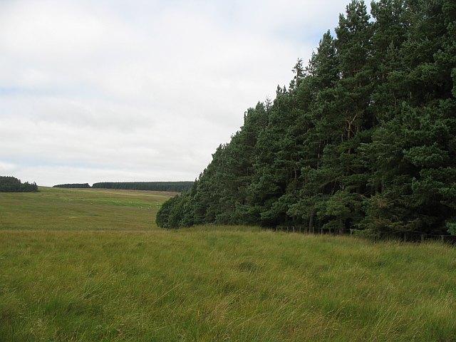 Established woodland, Lurgiescleuch