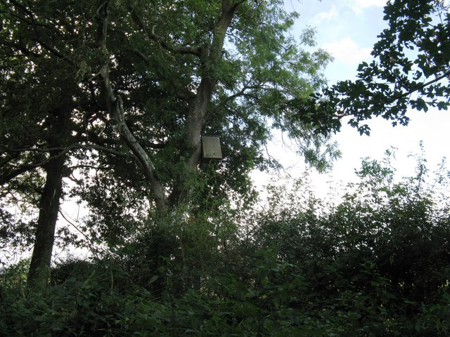 Owl nesting box near Gravatt's Farm