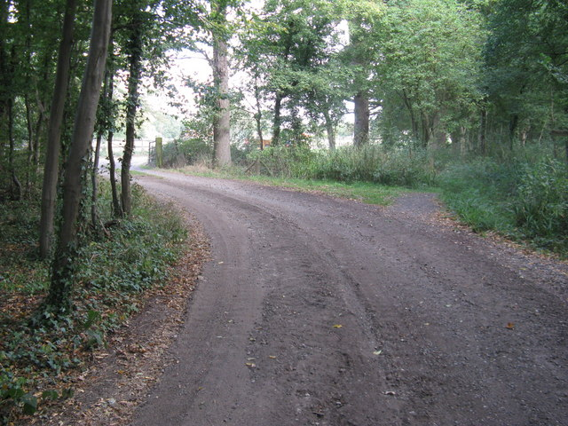 Bridleway from Godley's Copse merges with the track to Gravatt's Farm