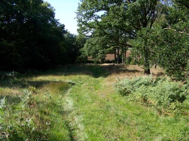 Footpath, Wilton Brail