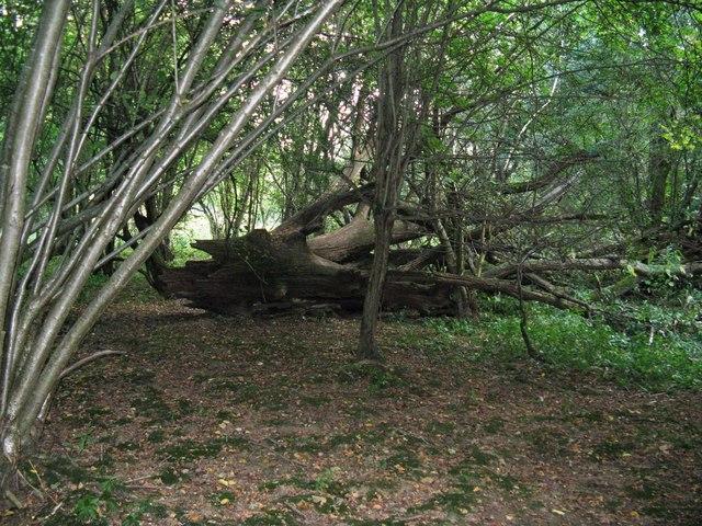 Decaying tree near Double Bridge viewpoint