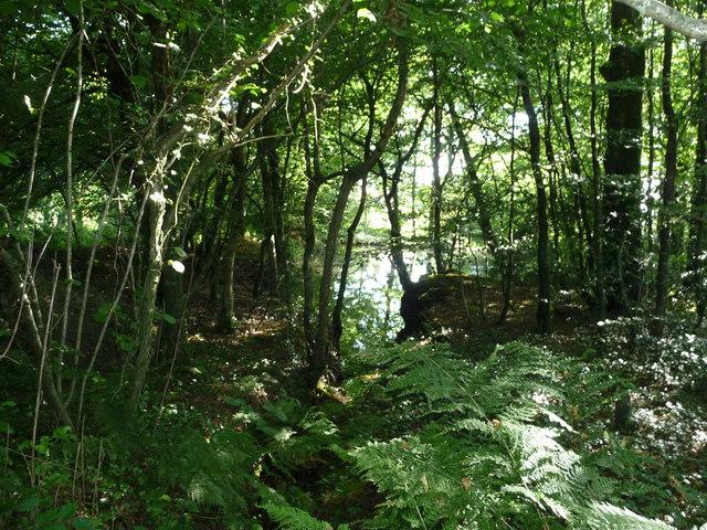 North Devon : The Wild Flower Garden , Trees
