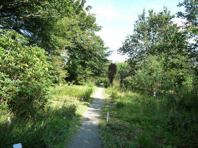 North Devon : The Wild Flower Garden, Footpath