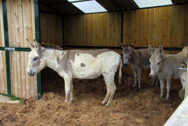 Donkeys at West Country Nurseries
