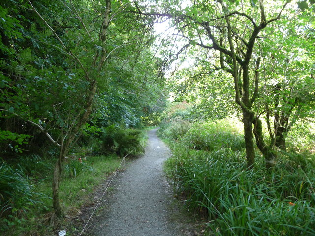 North Devon : The Wild Flower Garden & Path
