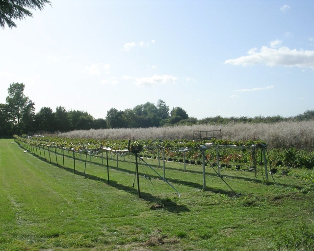 Nursery - Vine House Farm