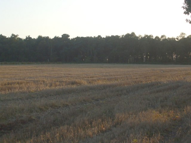 Stubble field towards Boundary Wood