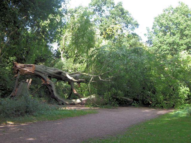 The blocked Ridgeway path, Moneybury Hill, Ashridge, from the south