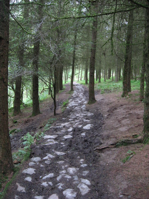Forest path on the Four Falls Walk