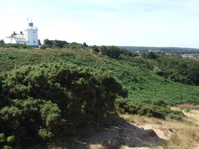 Gorse bushes on Cromer cliffs