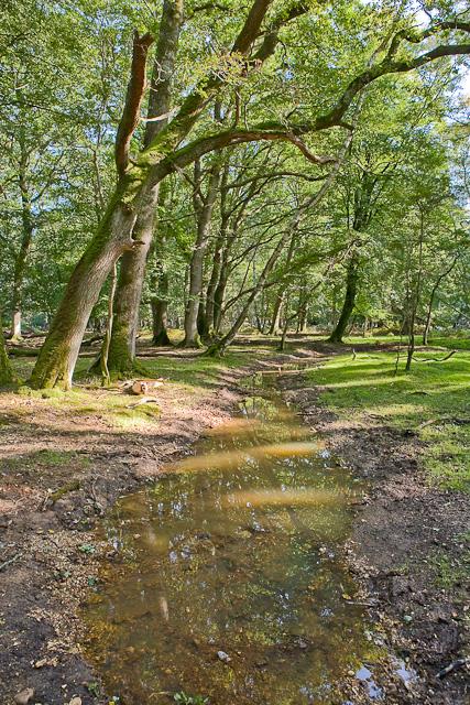 Warwickslade Cutting: the new stream flows
