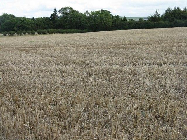 Stubble field at Dalhousie