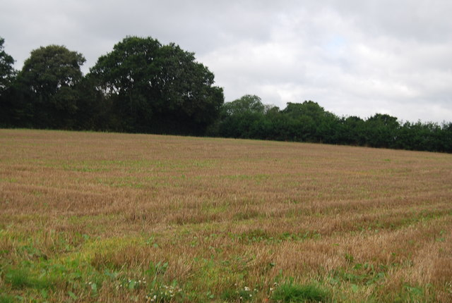 Field of stubble by the Tunbridge Wells Circular Path