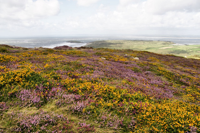 Gorse and Heather, Rhossili Down