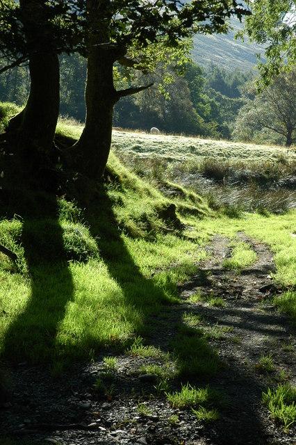 Footpath in Cwm Cywarch