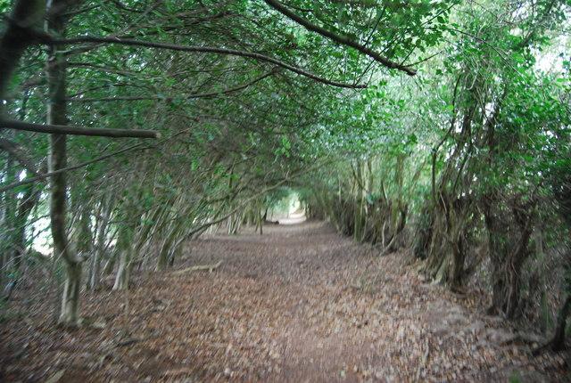 Tunbridge Wells Circular Path passes through an avenue of trees, Pembury