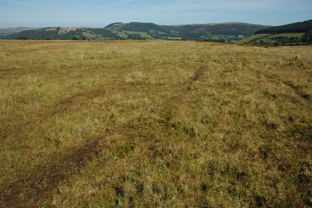 Rough grazing on Bryn y Gadair