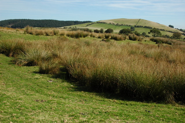 Marshy ground on Bryn y Gadair