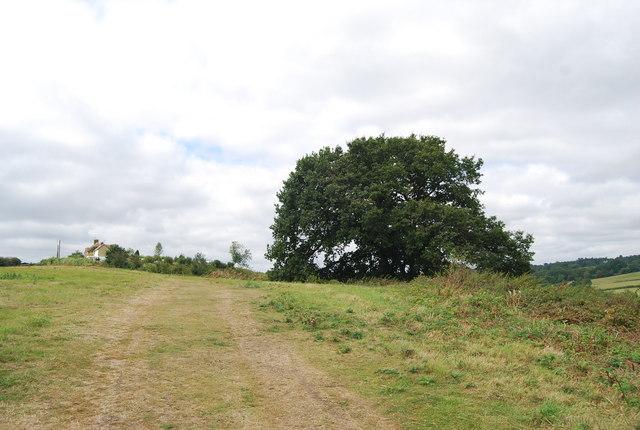 Tree by the Tunbridge Wells Circular Path near Little Bayhall