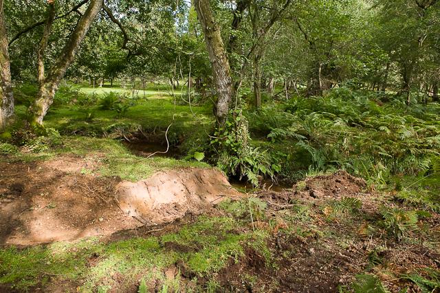 Warwickslade Cutting: new stream takes shape