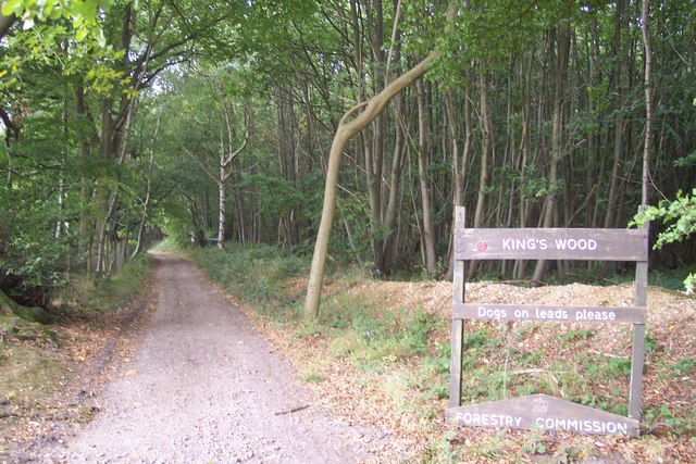 Byway in King's Wood