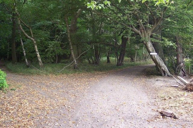 Footpath junction in King's Wood