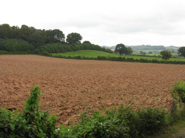 Fields Of Stanford on Teme