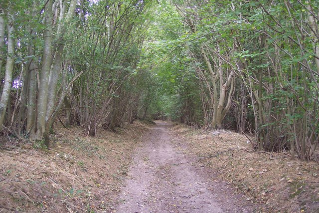 Byway in Pigeonhouse Wood