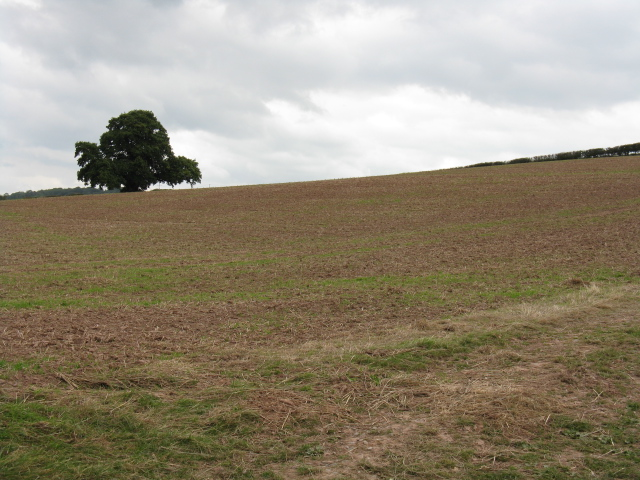 Hillside Near Lowerhouse Farm