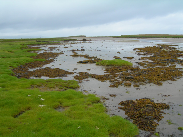 The shallow mossy banked Ouse