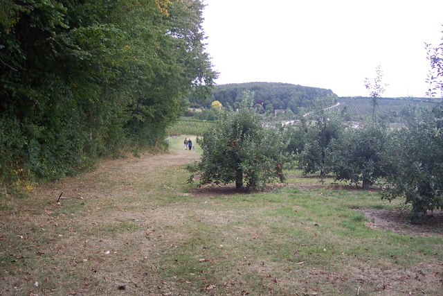 North Downs Way in Nickle Farm Orchard