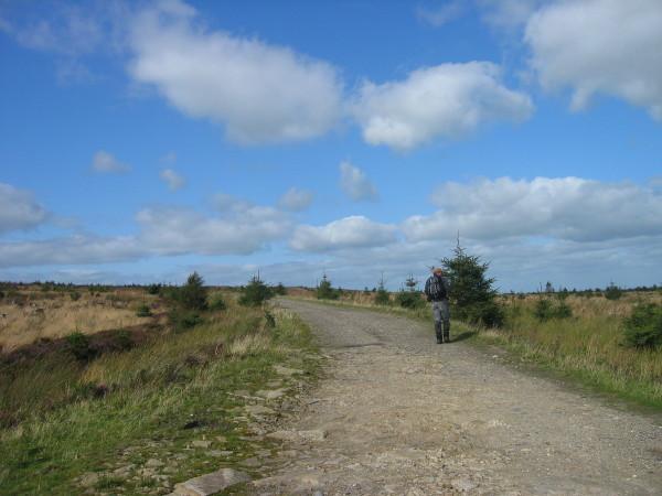 Track through Hartleyburn Common Plantation