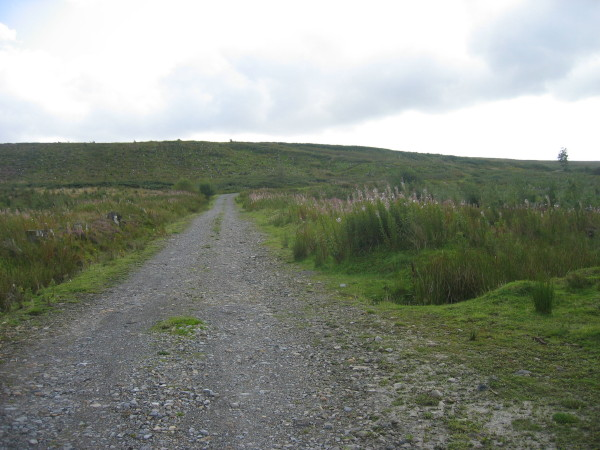 Track through Hartleyburn Common Plantation