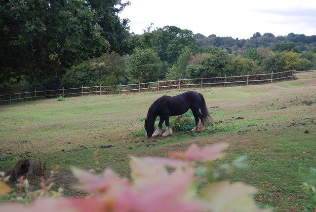 A horse near Tutty's Farm