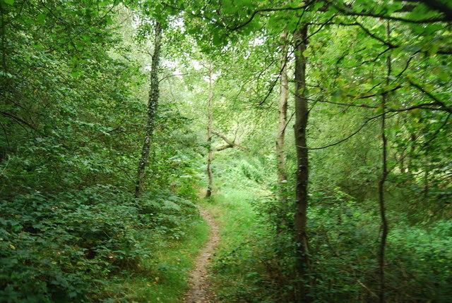 Tunbridge Wells Circular Path - through the woods near Tutty's Farm