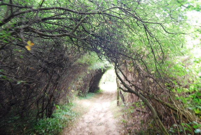 A tunnel of bushes & trees as the Tunbridge Wells Circular Path leaves Kent