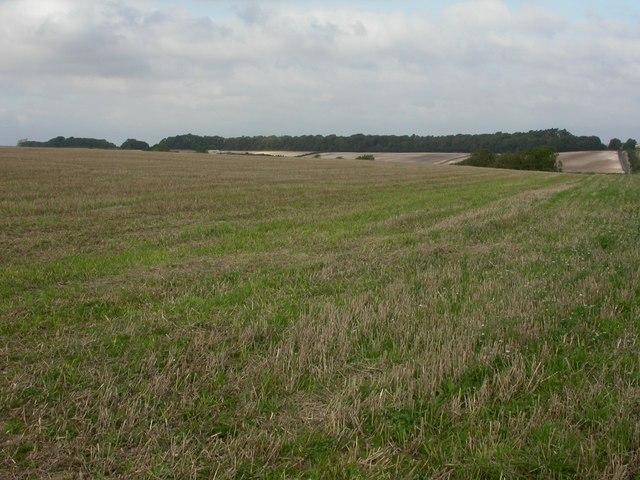Poundbury, stubble field