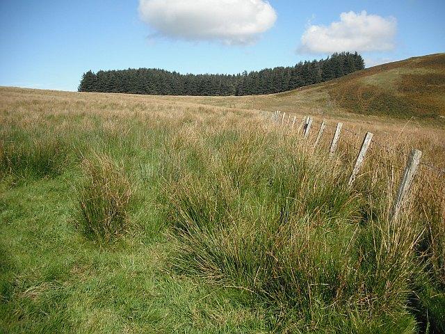 Rashy land, Penchrise