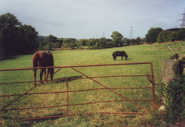 Field with horse and pony near Greetland Wall, West Yorkshire