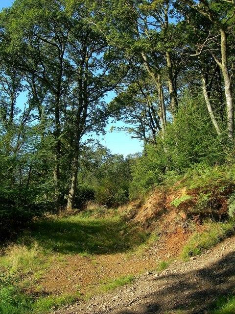 Burnie Oak Wood