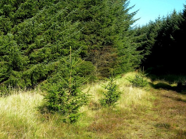 Forest Track On The Edge Of Glessal Hill