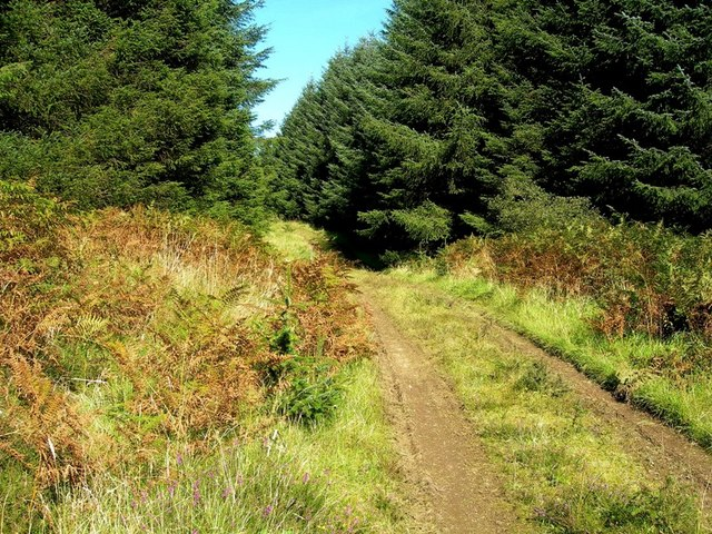 Forest Track Between Breaker Hill & Glessal Hill