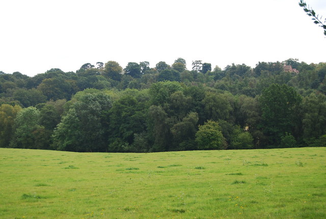 The northern edge of Chase Wood
