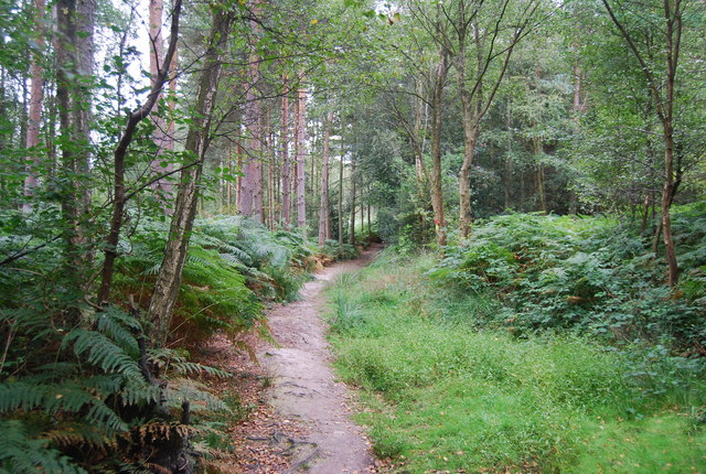 Tunbridge Wells Circular Path - Chase Wood